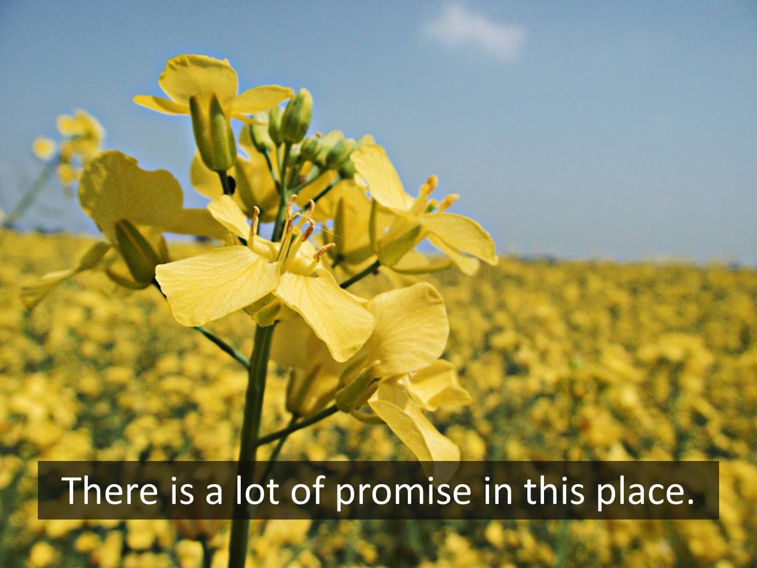 The Promise of the Mustard Seed