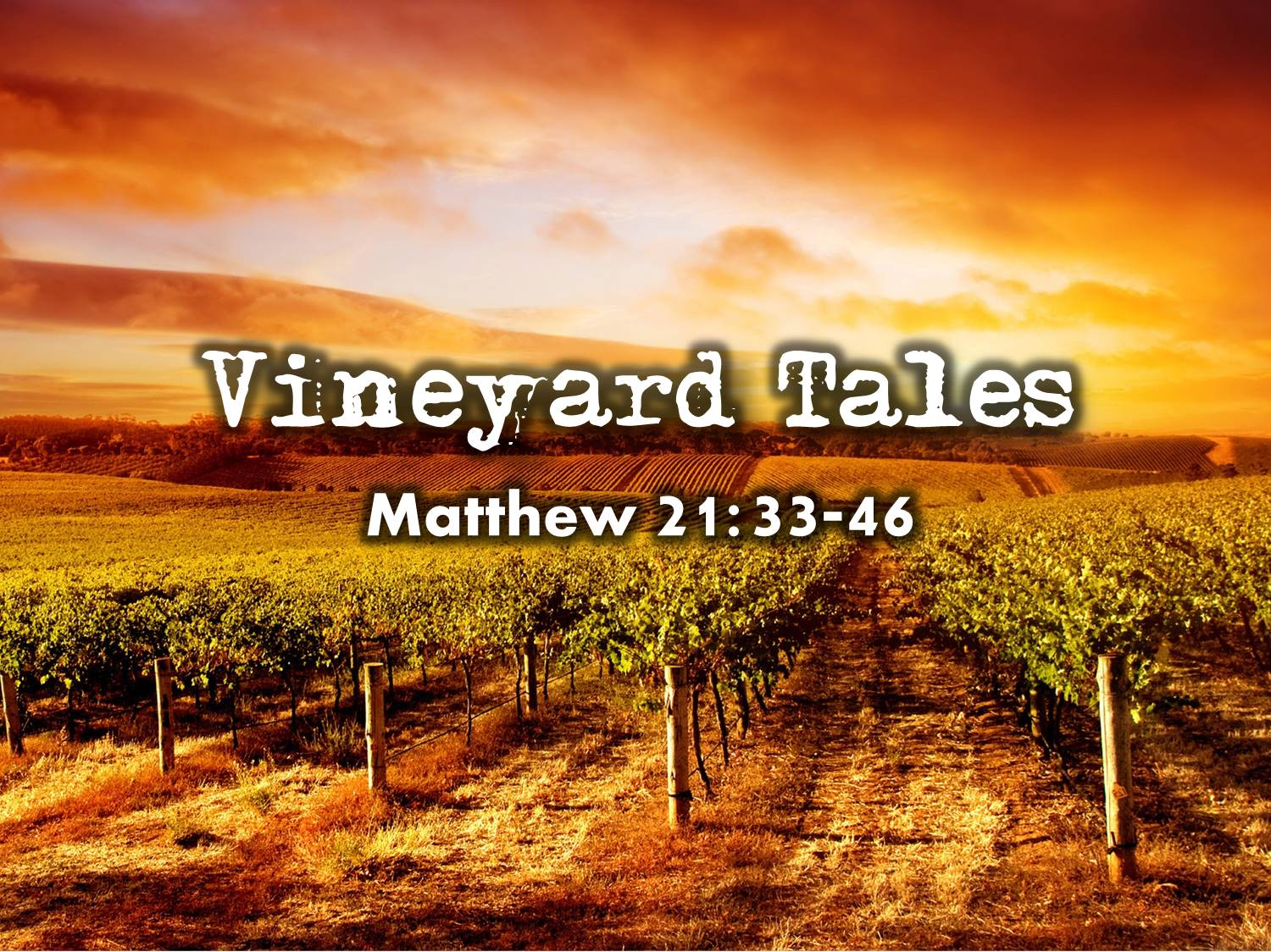 2014 10 05 Vineyard Tales (Web Background)