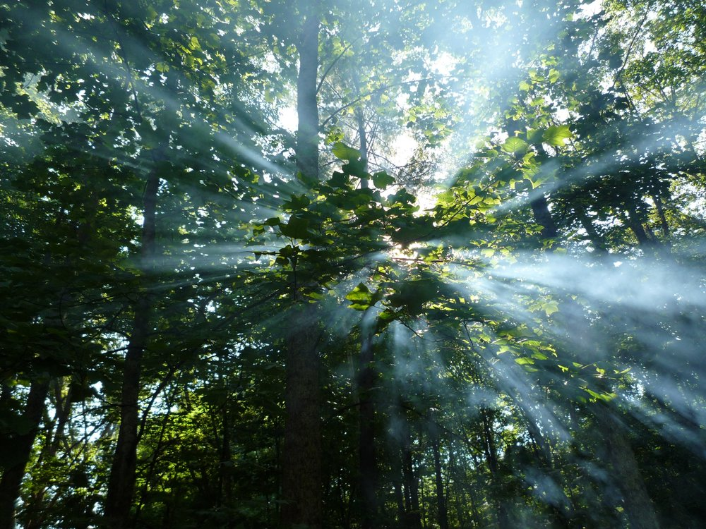 light-through-trees.jpg
