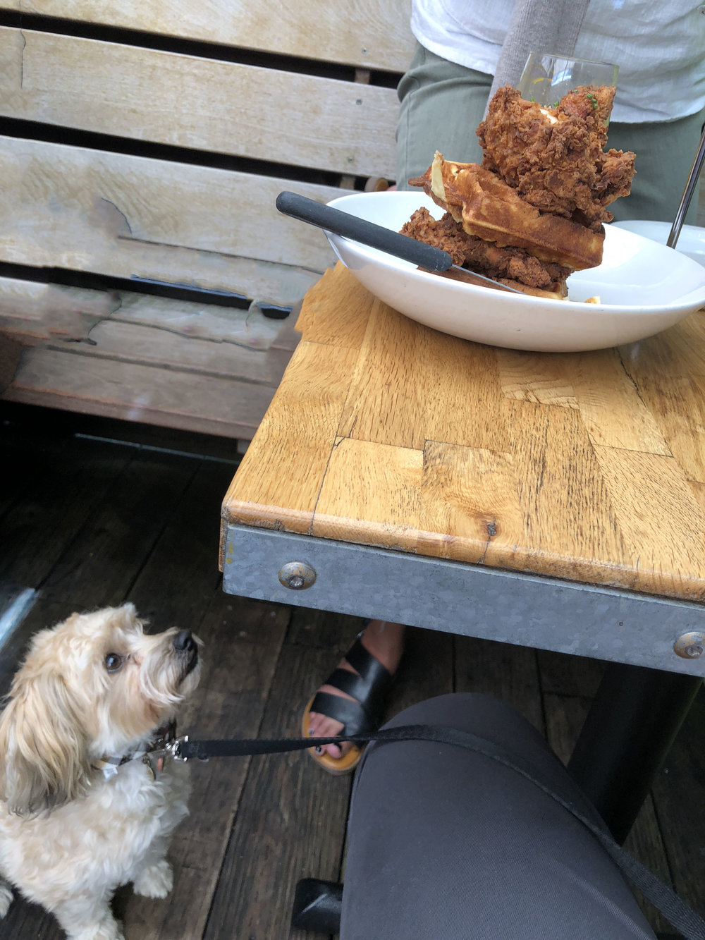 Furbaby scheming on how to reach that chicken!