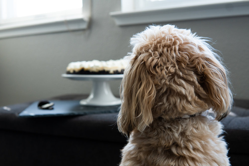 Furbaby observing the photo shoot!