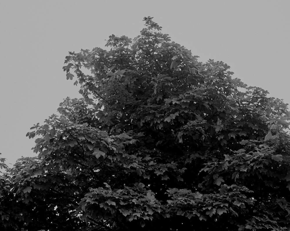 Garden_048.jpg