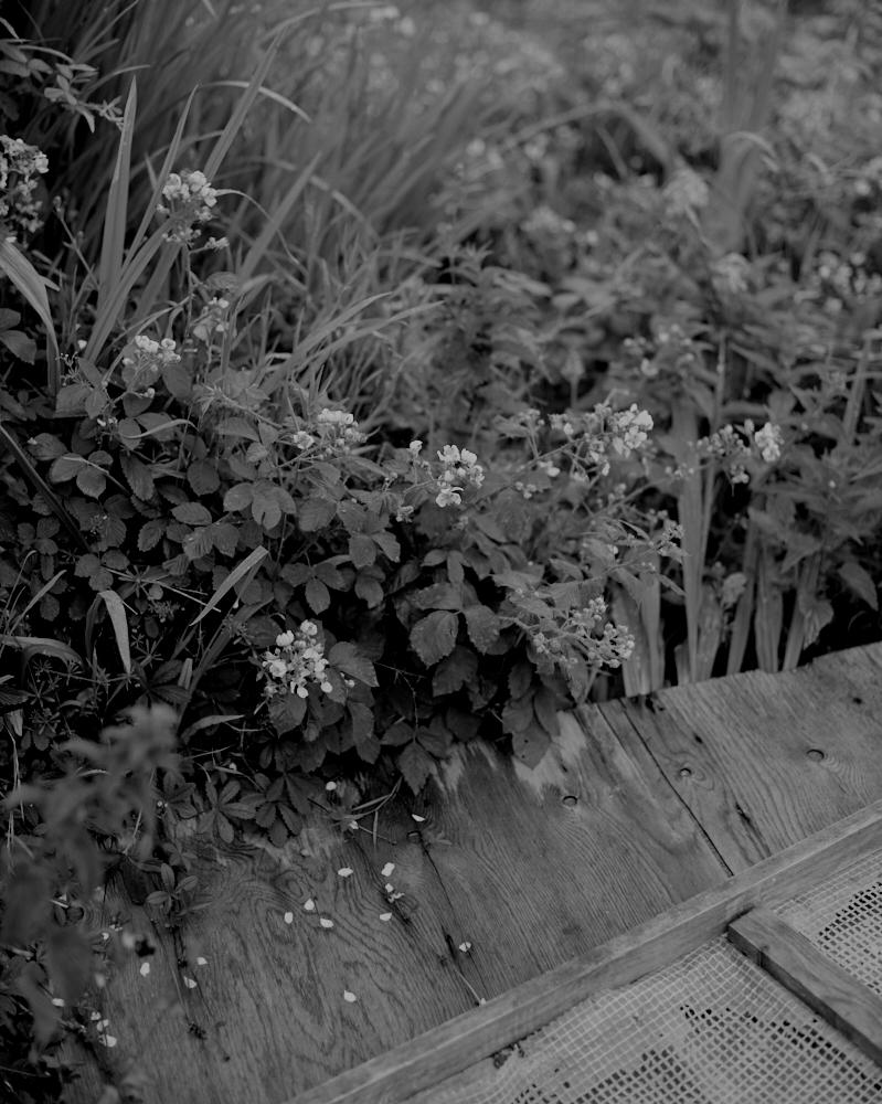 Garden_050.jpg