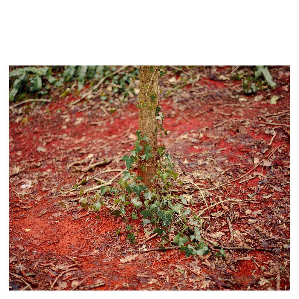 Ochre Tree.jpg
