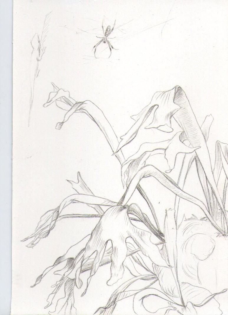 Garden studies002.jpg