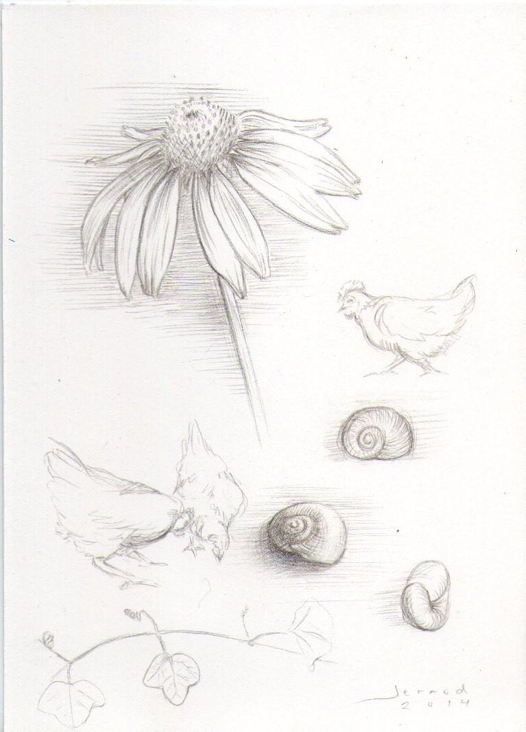 Garden studies003.jpg