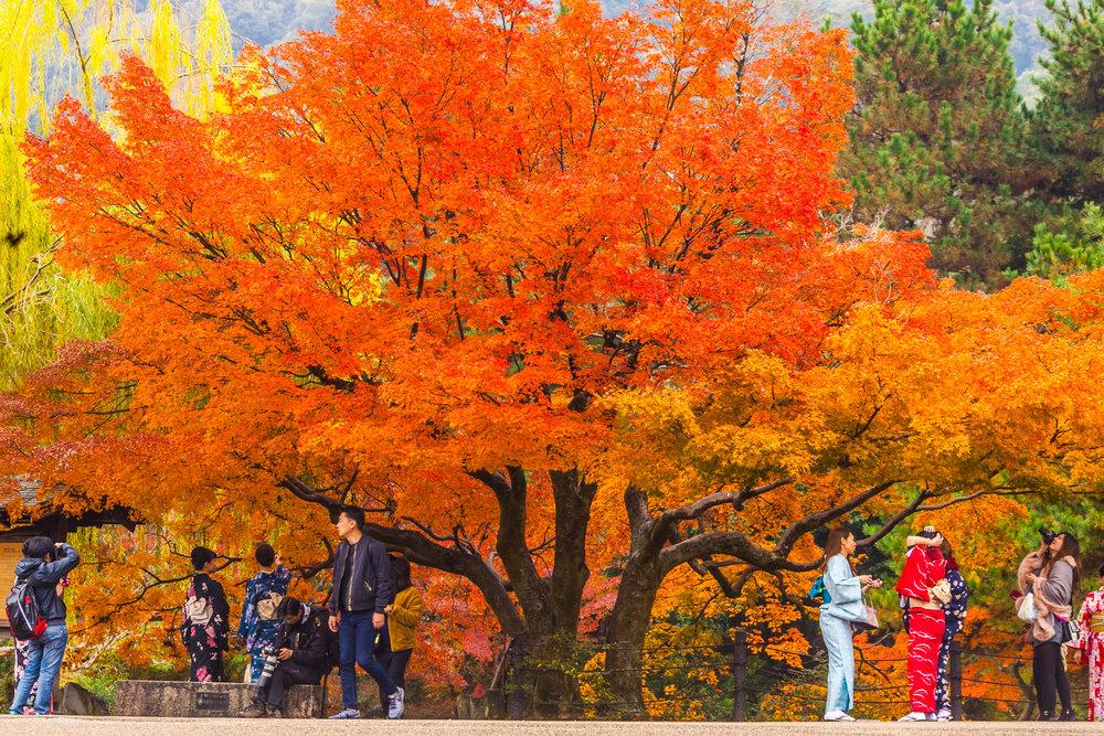 kyoto park momiji.jpg