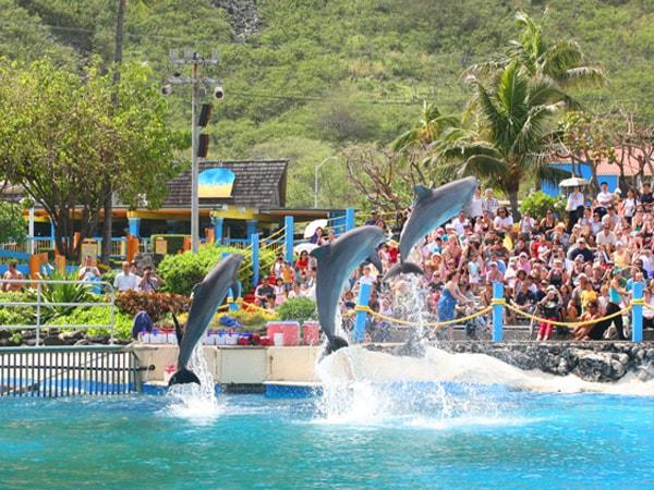 dolphin-show.jpg