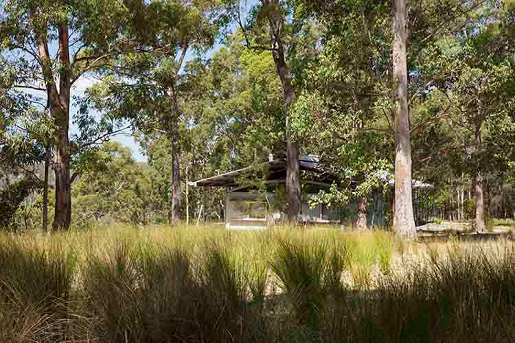 R157512-05-Forest-Edge-Garden-Dianna-Snape.jpg