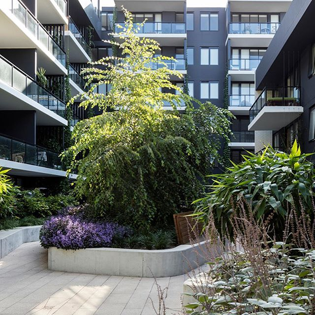 EVE Apartments by @360degreeslandscape  successfully establishes an immersive 'backyard' feel for residents through the use of a lush planting palette that promotes interaction with a mix of beautiful garden spaces. . . 2018 NATIONAL LANDSCAPE ARCHITECTURE AWARD - GARDENS . 2018 NSW AWARD OF EXCELLENCE - GARDENS . . #landscapearchprojects #landscapearchitects #landscapearchiture #landscapearch #eveapartments #gardens #360landscapearchitecture  #landscapeplanning #designedbyalandscapearchitect #aila . . @aila_national @aila_nsw