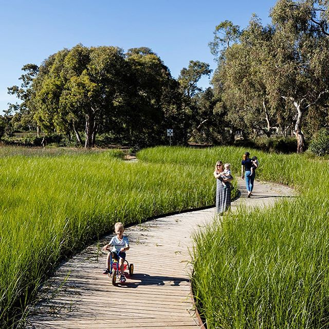 Oaklands Park and Wetland project by @tcl_studio clearly shows the benefits landscape architects can bring when they lead green infrastructure projects. At the heart of the project is a functional wetland which harvests 500 Megalitres of water from the Sturt River for use in irrigation of 30 other open spaces and for groundwater recharge. . . 2018 NATIONAL LANDSCAPE ARCHITECTURE AWARD - PARK AND OPEN SPACES. . . 2018 SA AWARD OF EXCELLENCE - PARK AND OPEN SPACES. . . #landscapearchprojects #landscapearchitects #landscapearchiture #landscapearch #oaklandparkandwetland #TCL #parkandopenspaces #greeninfrastructure #wetlands #community #sturtriver #designedbyalandscapearchitect #aila . . @aila_national @aila_sa_