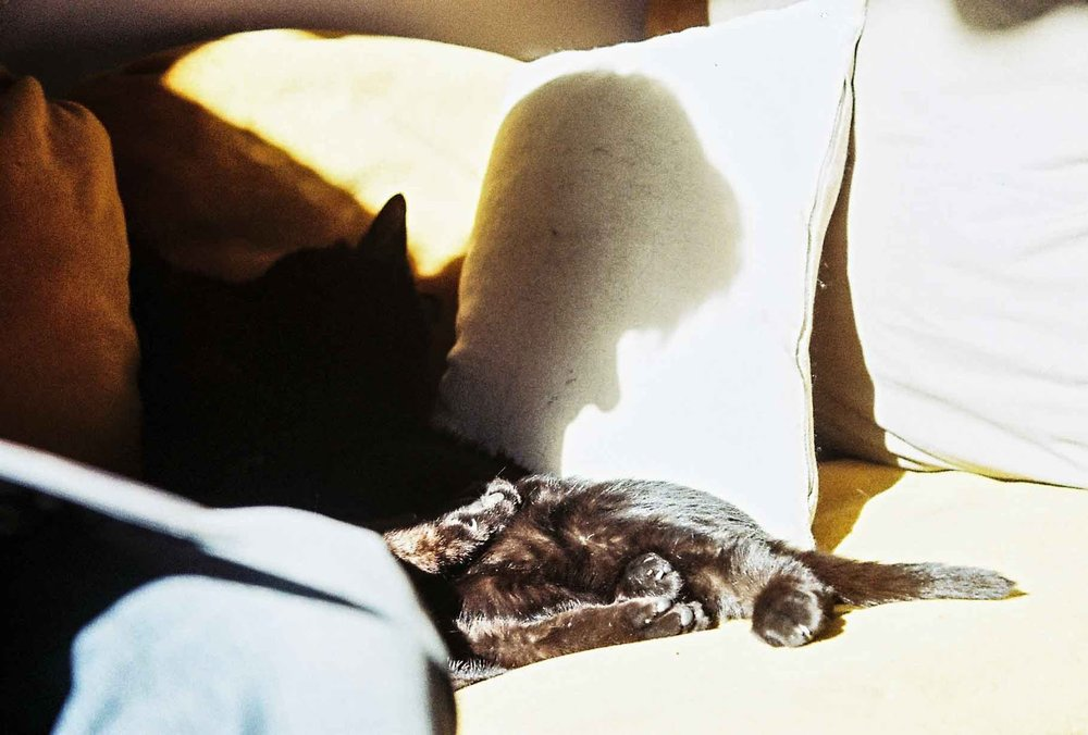 nadia_mounier_photography_analogue_cat_shadow_marseille.jpg