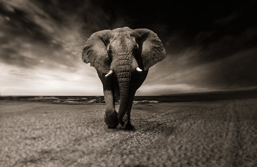 The Elephant-Collective community is expanding…. New artists coming soon!!!