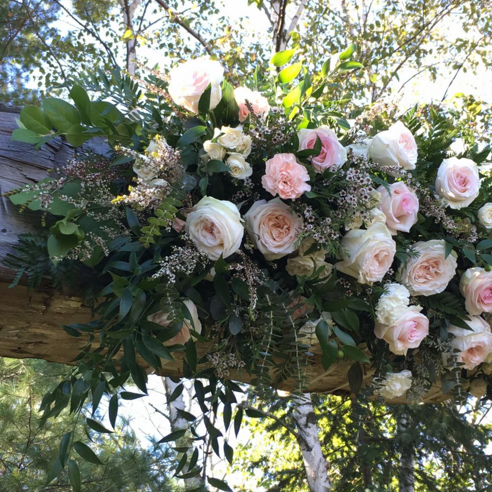 Close Up of Arbor Flowers