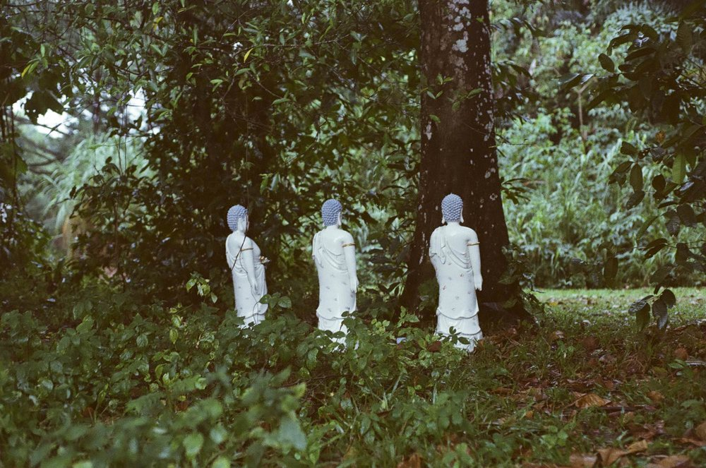 Beneath the Bodhi & Banyan , Lee Chang Ming 2018