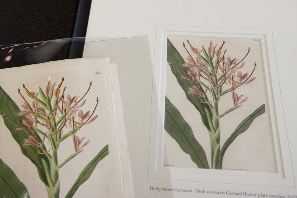 botanical-illustration-restoration.jpg