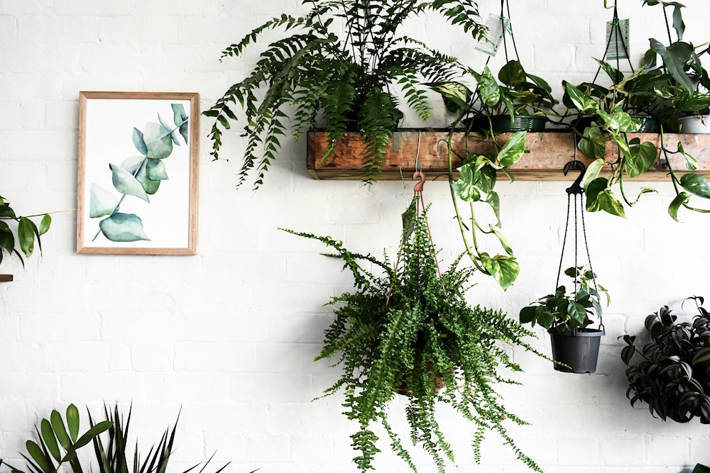CADABBRA Plantsmith_4- Photograph by Josh Stapleton.jpg