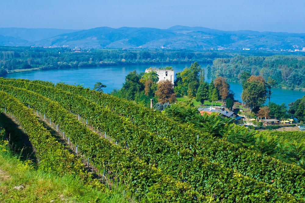 Lusthausberg - Am Hollenburger Lusthausberg nahe der Donau ist vor allem der Boden speziell:: Konglomerat und Donauschotter sind hier vorherrschend und verleihen dem Wein eine einzigartige Mineralität und eine unverkennbare Identität.. Durch den äußert kalkhaltigen Boden fühlt sich Grüner Veltliner besonders wohl und erlagen die perfekte Reife.