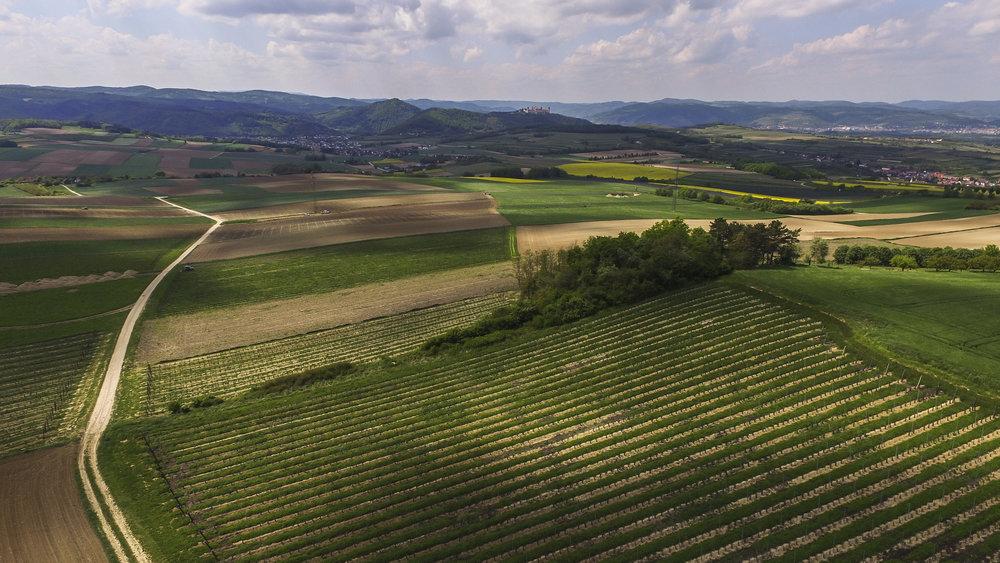 Himmelreich - Die Riede Himmelreich in Höbenbach ist geprägt durch sehr tiefgründige und mächtige Lehm-Lössböden mit hohem Kalkgehalt. Die Weine, die hier gedeihen, sind sehr fruchtintensiv mit einem schönen, typischen Sortencharakter. Die Sorte Grüner Veltliner fühlt sich hier besonders wohl und bildet hier die klassischen würzig-pfeffrigen Noten besonders gut aus.