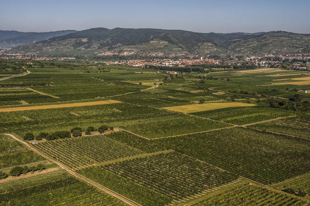 Ried Oberfeld - Eine ebene Lage, die sich zur Wachau hin öffnet und von steilen Hängen am Fuße des Göttweiger Berges umrandet ist. Hier sorgen wir uns um gut 42 Hektar Grünen Veltliner, der auf einem sehr sandigen Lössboden langsam und gut wächst. Diese Weine zeigen besondere Finesse und Eleganz.