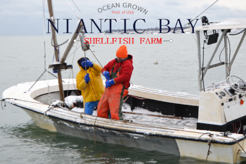 Niantic Bay Shellfish Farm - Services Provided Include: Web Design, Graphic Design, Print Design, Copywriting, Content Creation, Videography, Photography, Social Media Management, Public Relations Management