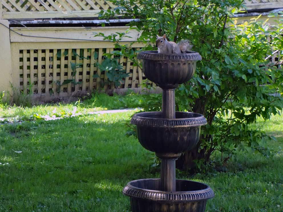 - Vogelbad - mit Eichhörnchen - auf der Wiese beim Apartment-Haus. Jane ließ sich von den Eichhörnchen zu einigen ihrer Gedichte inspirieren.