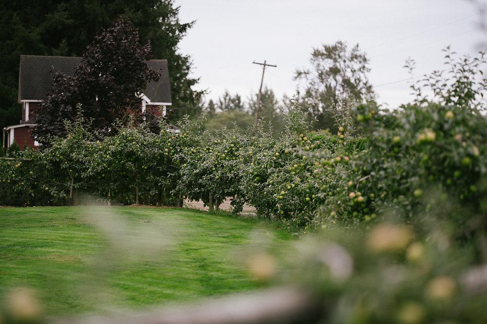 Swan Trail Farm Wedding_Sarah Schurman + Brian Skadan_Snohomish Wedding_Kelsey Lane Photography-5525.jpg