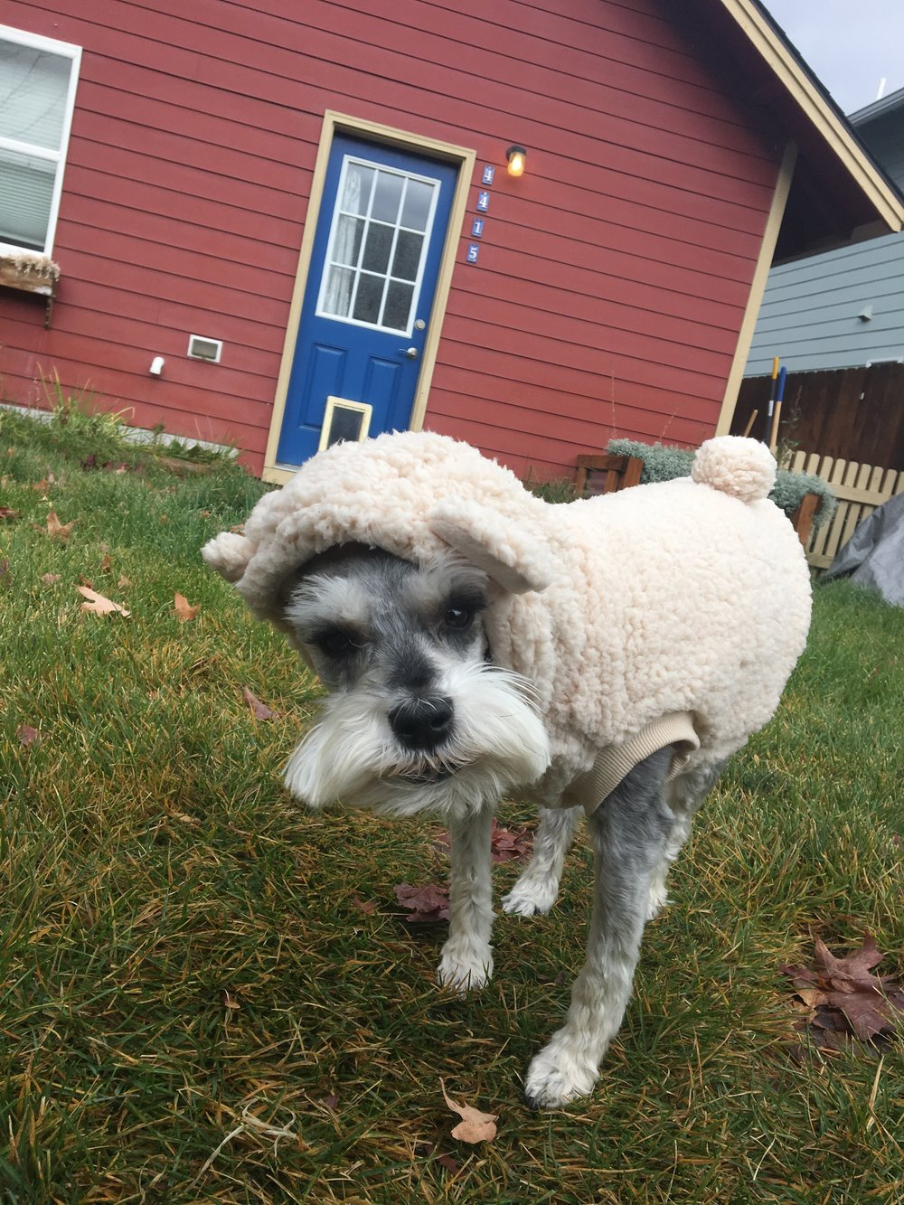 Doc went as a sheep for Halloween! And now he won't take the thing off. No, seriously. He won't!
