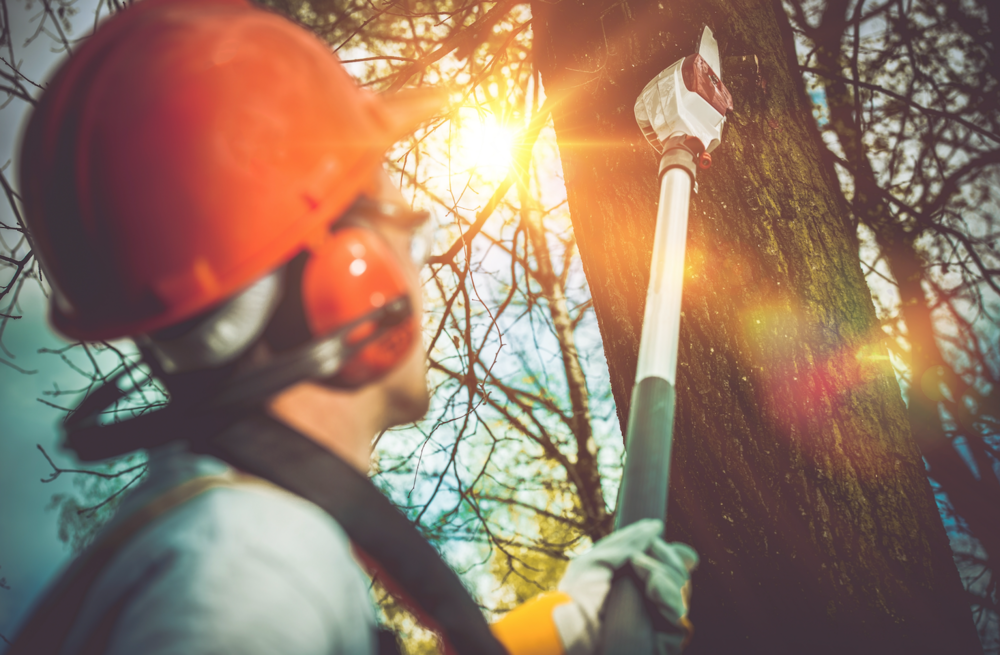 Landscape contractors with tree and lawn service in Buffalo Grove, IL