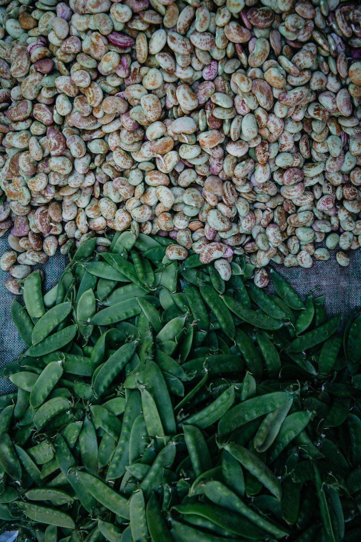 DD_Myanmar_InleLake_Card04-c86.JPG