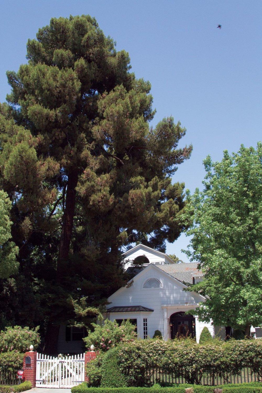 Westchester Bakersfield Neighborhood (Photo taken by Gregory Cook with the Bakersfield Californian)
