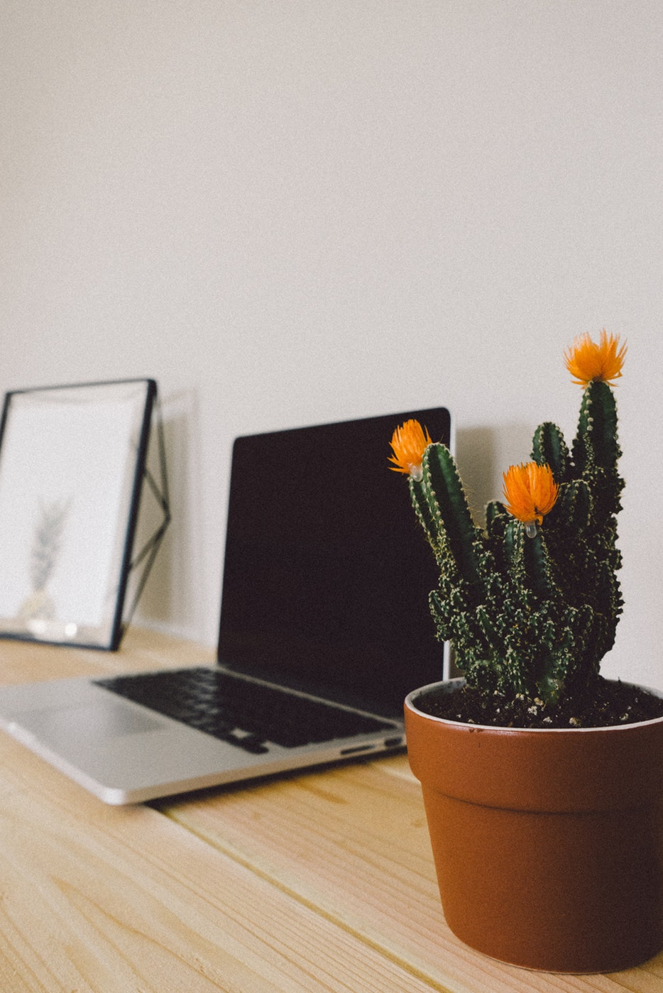Laptop and cactus