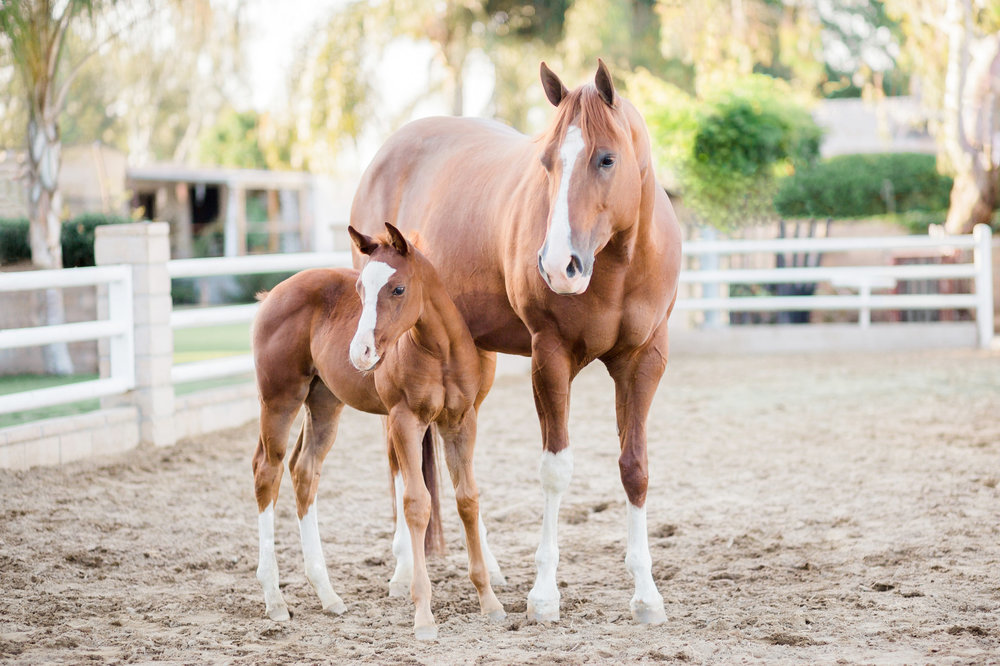 Photo by Casey Hardy, a local Bakersfield equine photographer