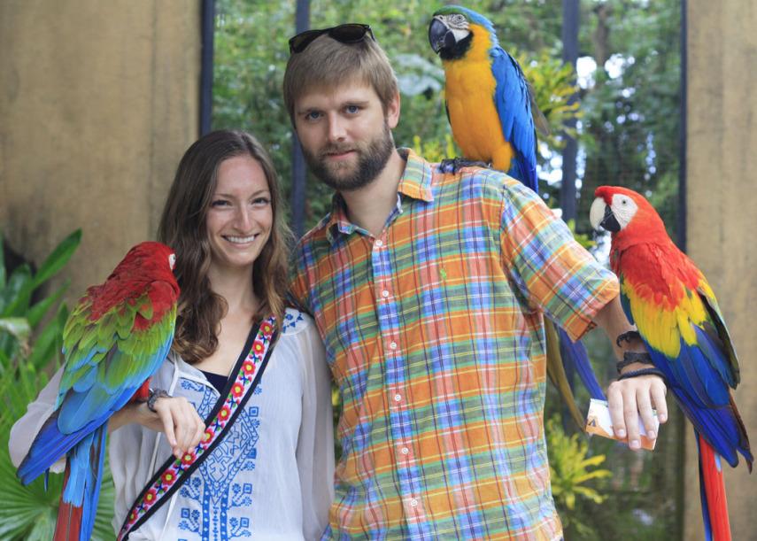 parrots in Bali Bird Park