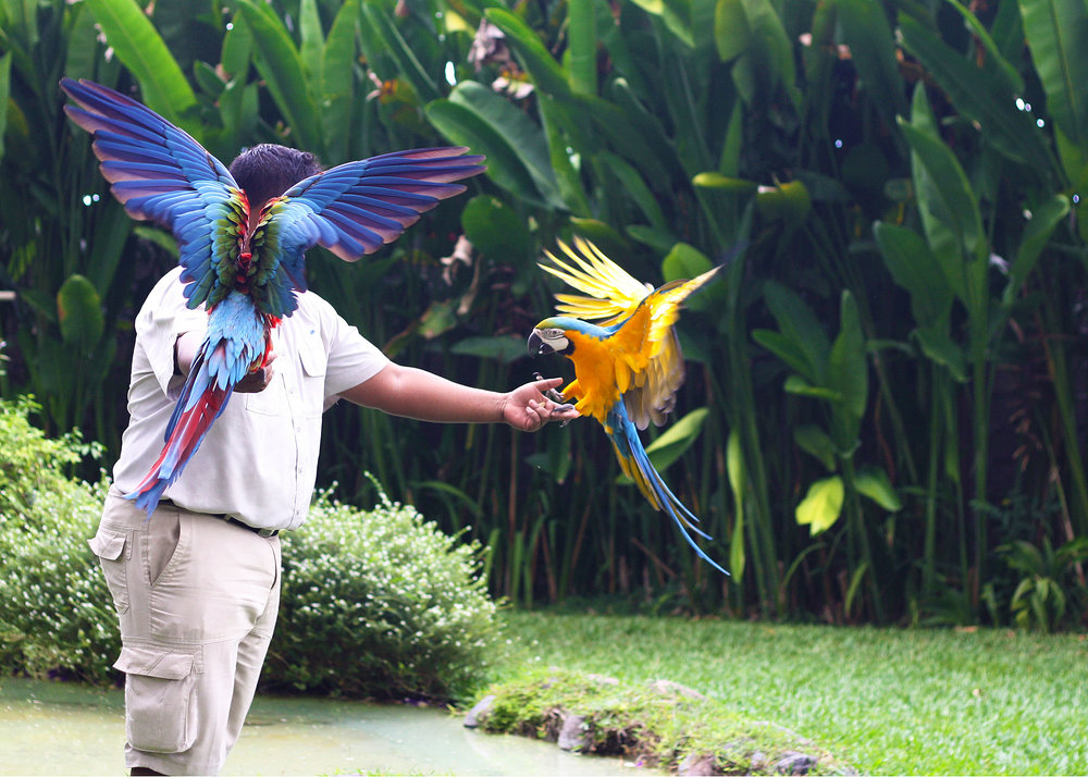 A Day At The Bali Bird Park Have Wifi Will Travel