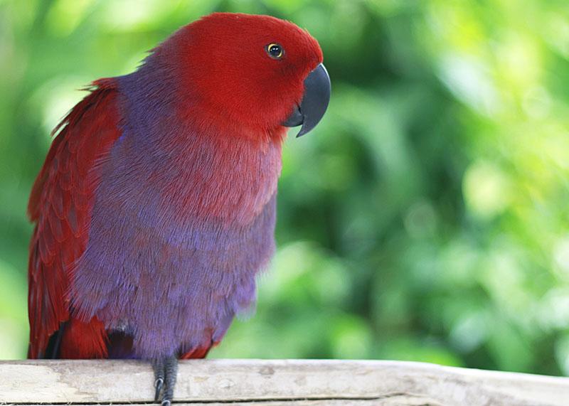 Birds in Bali Bird Park