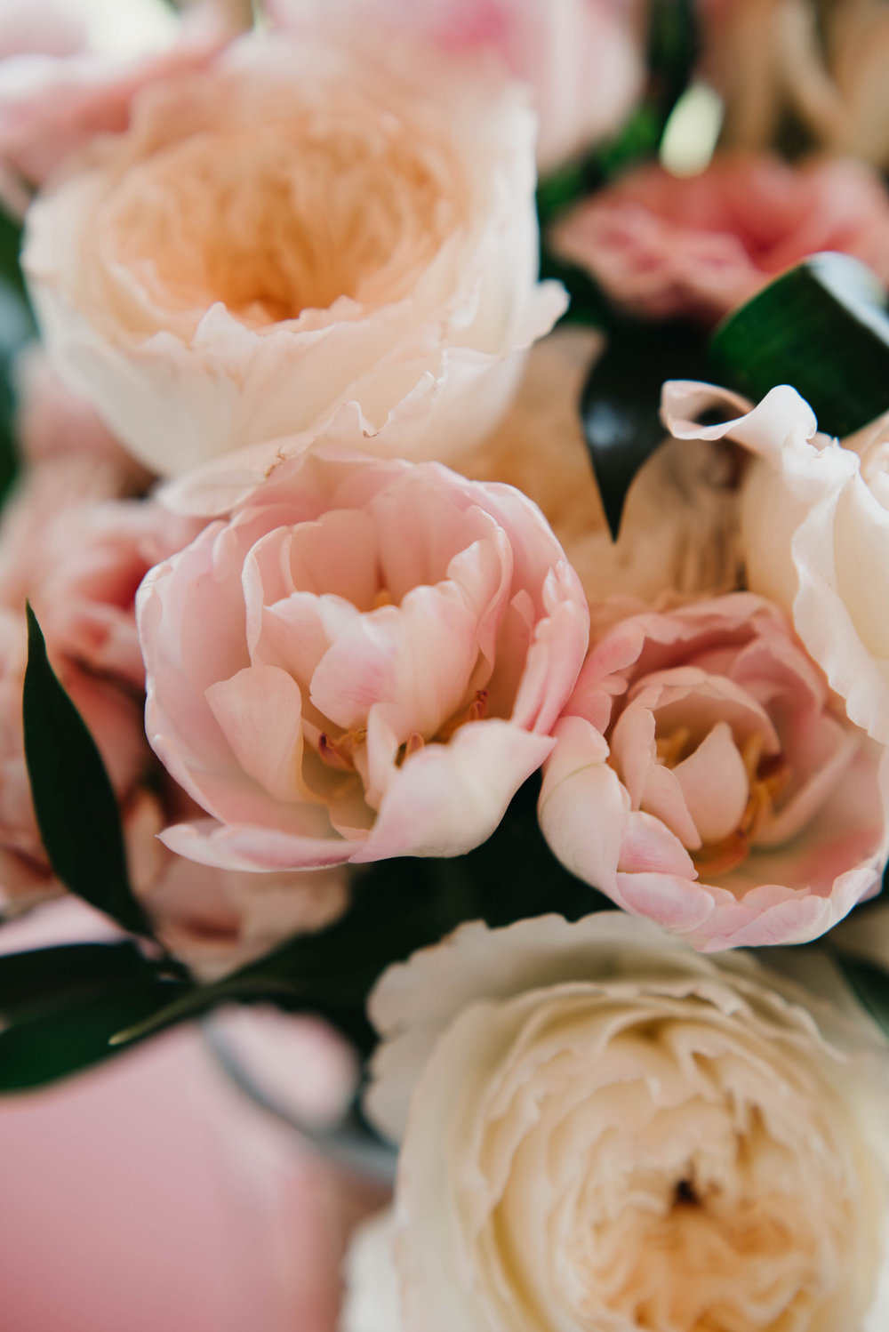 Floral ll-Katelyn V Photography.jpg