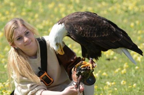 Visit Hawk Conservancy