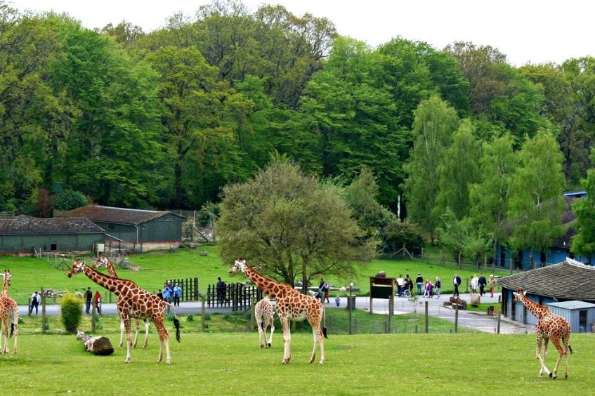 Visit Marwell Zoo
