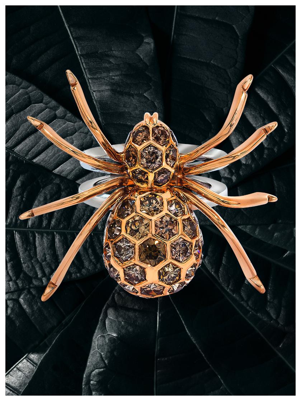 spider01_V.jpg
