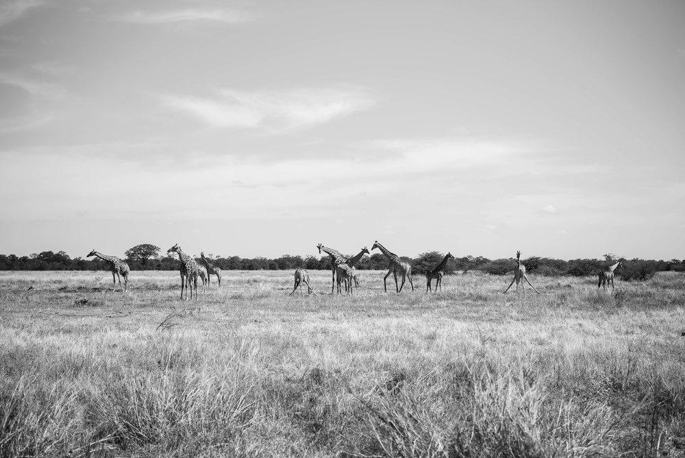 Erin-Fabio-Photography-Africa-2018-9-2.jpg