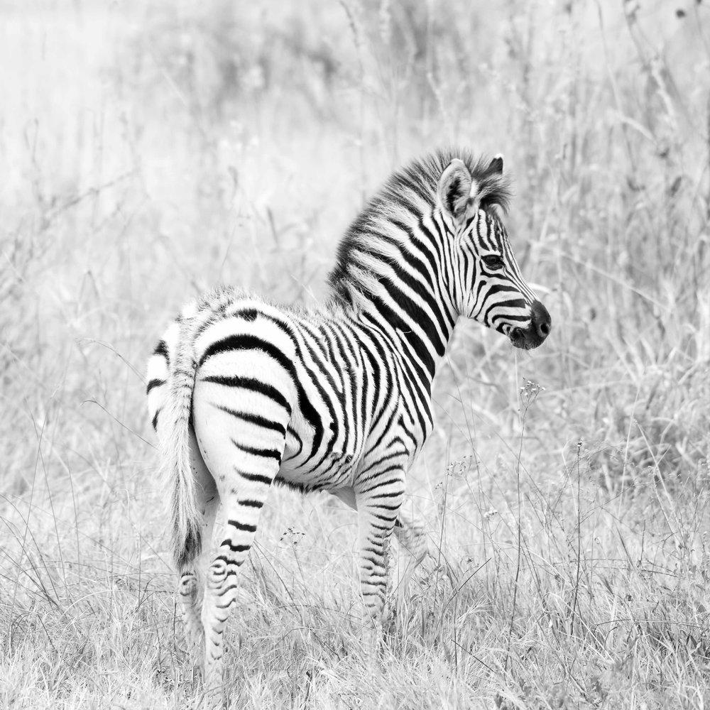 Erin-Fabio-Photography-Africa-2018-35.jpg