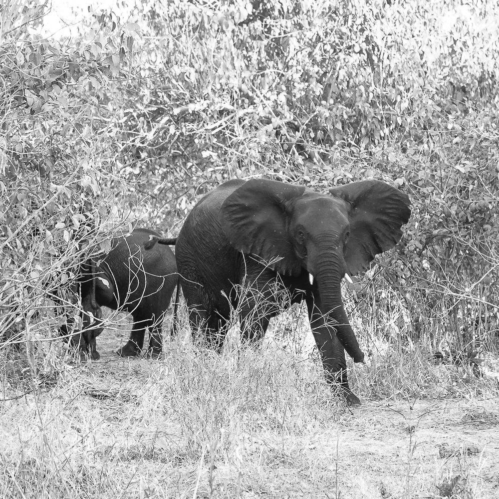 Erin-Fabio-Photography-Africa-2018-46.jpg