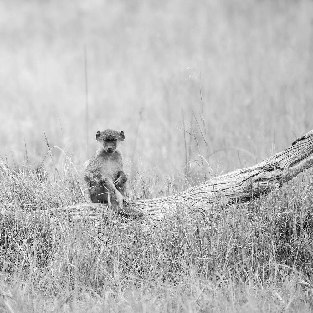 Erin-Fabio-Photography-Africa-2018-48.jpg