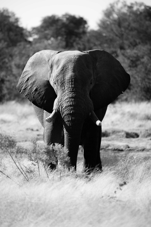Erin-Fabio-Photography-Africa-2018-24.jpg