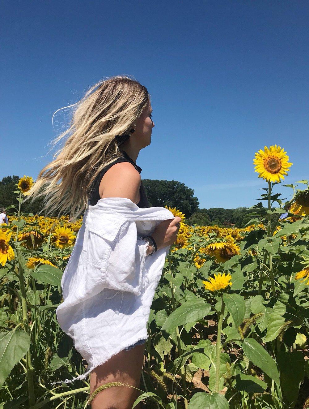 whitesunflowers.jpeg