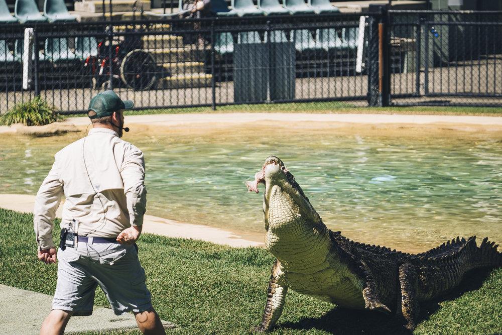 Australia Zoo_Queensland_Photo Ord-103.jpg