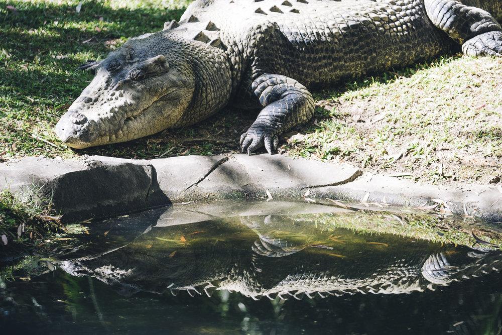 Australia Zoo_Queensland_Photo Ord-139.jpg