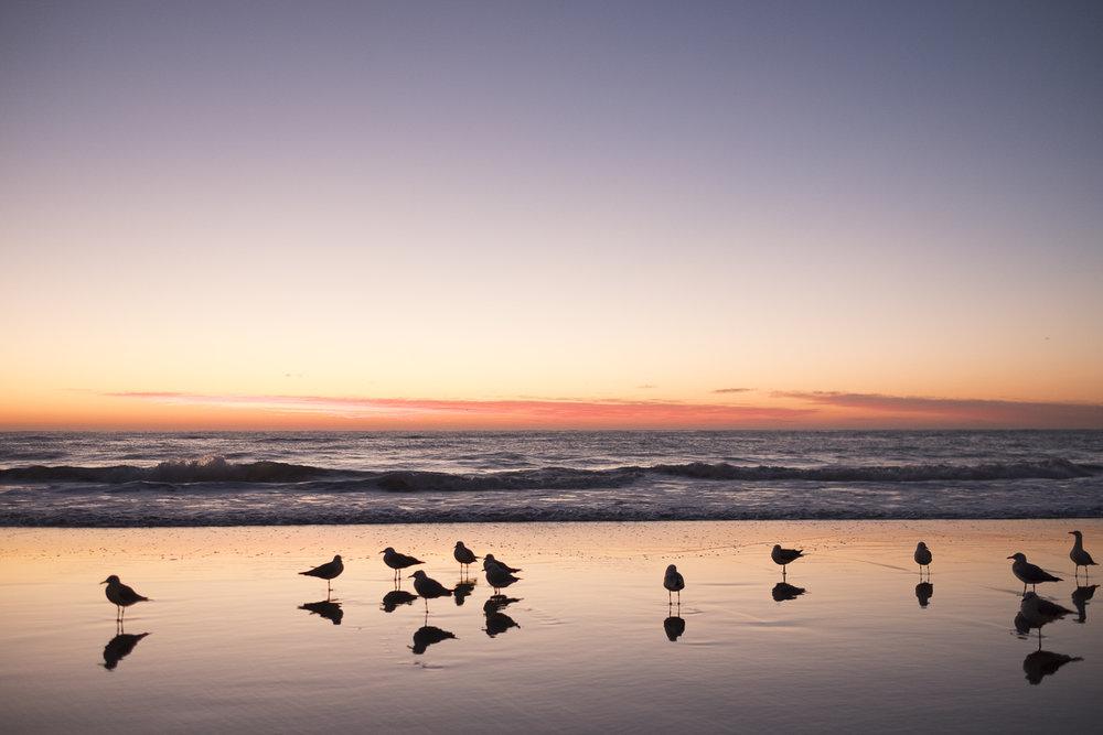 Gold Coast_Queensland_Photo Ord-105.jpg