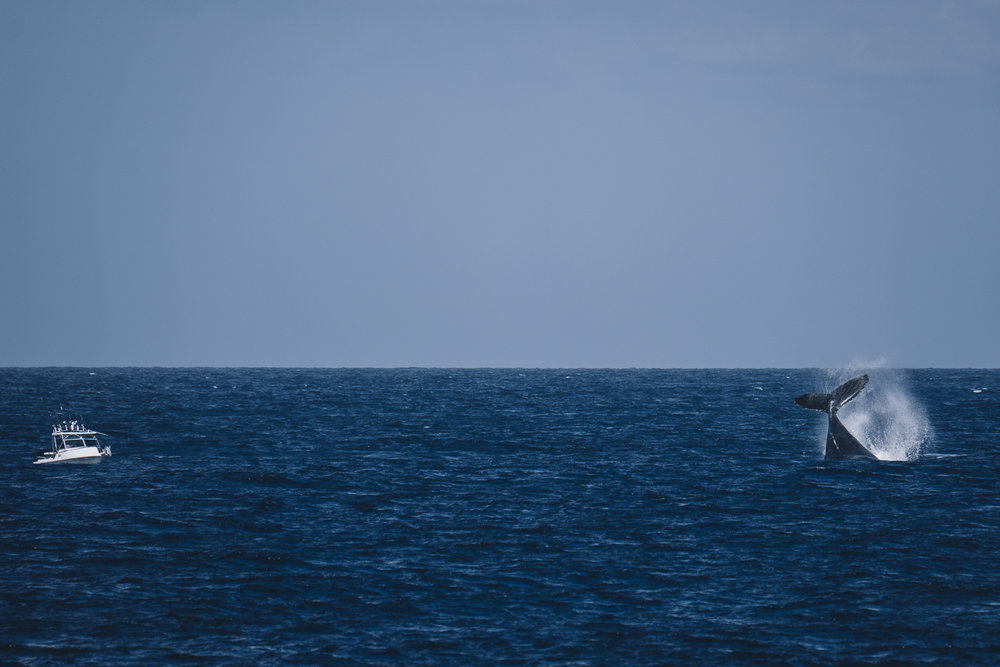 Whale Watching_Queensland_Photo Ord-26.jpg